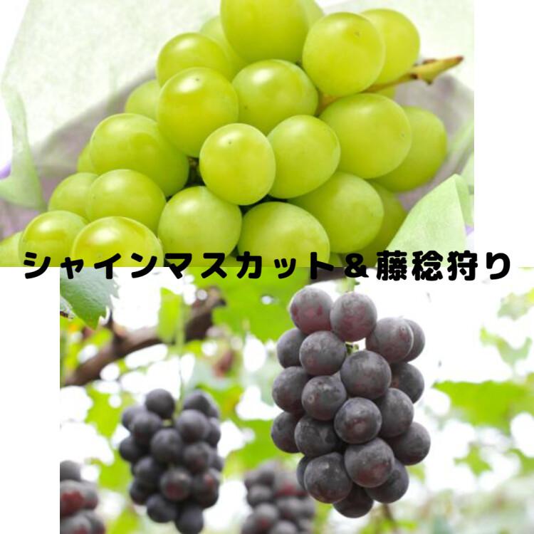 10月1日(金)出発 日帰りバス旅 出発決定のお知らせ!